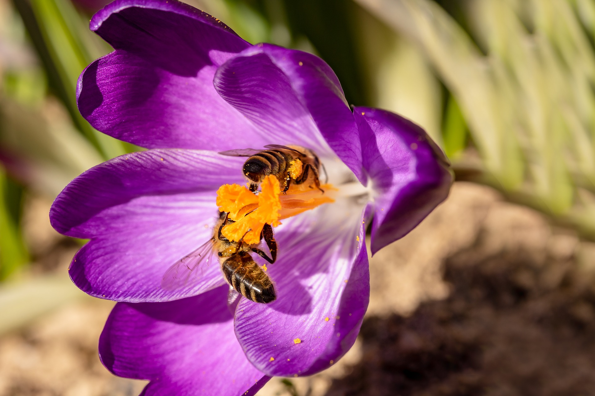 bees-4051546_1920